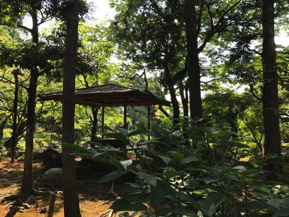 三島の言の葉の庭