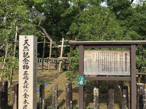 三嶋大社 金木犀