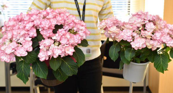 母の日 お花のプレゼント