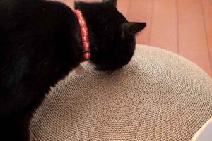 バリバリボウルに興味を持つ猫